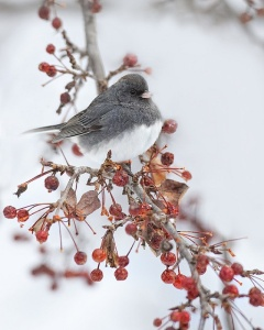 a bird in winter